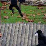 """""""Mouairf, fais ton malin avec tes sauts: n'empêche que pour la boustiffaille, c'est moi le meilleur!"""" (Branféré, 29/10/14)"""