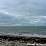 Mais plutôt par là La plage est encore vide.  (Otaries 2014)