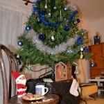 Le soir, on prépare le lait chaud, et les biscuits pour le papa Noël, et la carotte pour les rênes (Noël 2014)