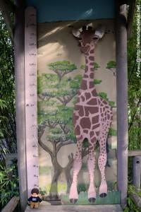 Quand je serai grand, je serai toujours petit ^^ (Zoo de la Flèche, août 2017)