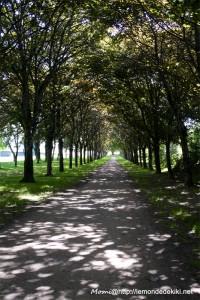 (Pourquoi tu ne dois jamais venir à Vannes?!) Le paradis des allergiques, ou pas!