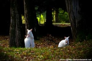 Moment tendresse de la famille albinos: câliiiiiiiiiiiiiiiiins!
