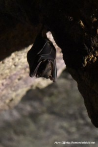 La grotte aux chauves-souris (Zoo de la Flèche, avril 2018)
