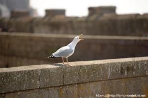 Concentre toi et écoute! Voilà, tu es en vacances au bord dela mer! (St Malo, vacances de printemps 2019)